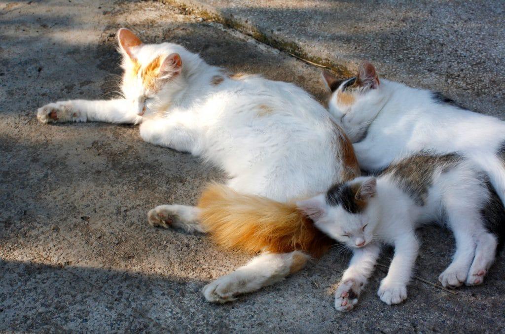 L'île aux chats au Japon